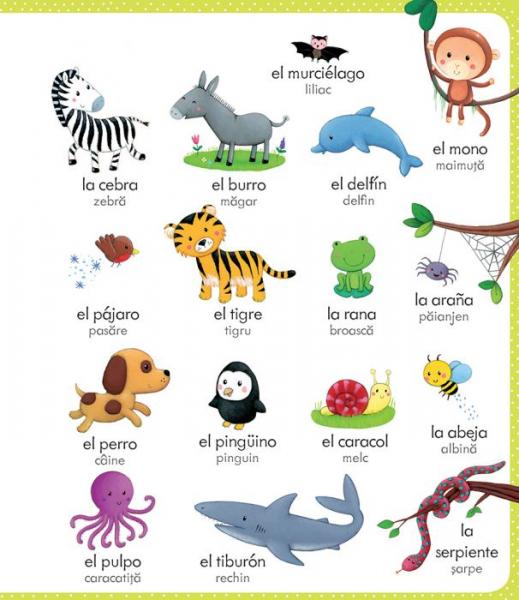 Primul meu dictionar spaniol-roman(Usborne) 2