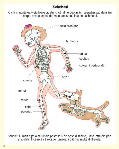 Descoperim corpul omenesc 1