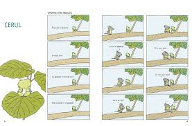 Gândurile unei broscuțe 1