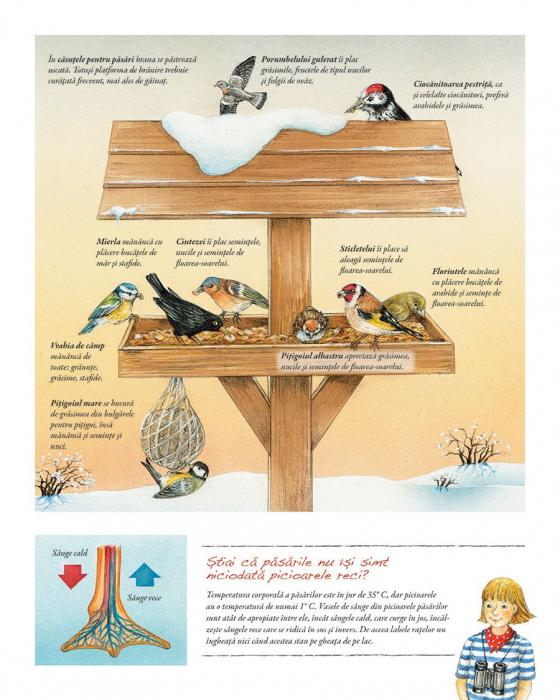 Minunata lume a pasarilor 2
