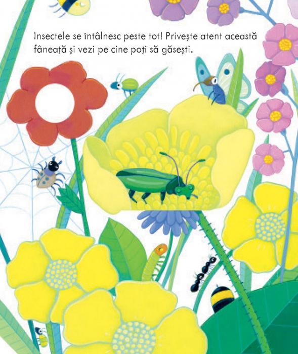 Casutele insectelor (Usborne) [1]