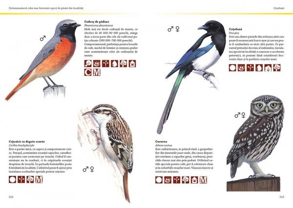 Prietenii păsărilor 1
