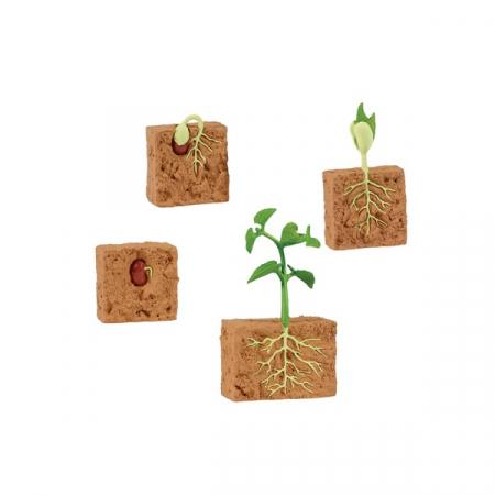 Set 4 figurine - Ciclul vietii la planta de fasole [1]