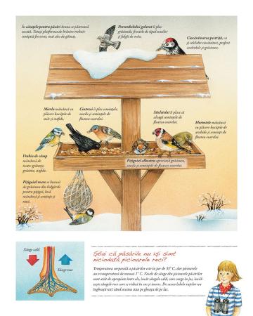 Minunata lume a pasarilor2