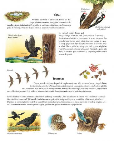 Minunata lume a pasarilor4