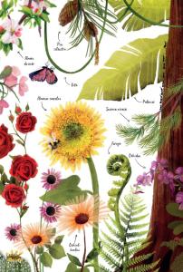 Prima mea carte despre natura4