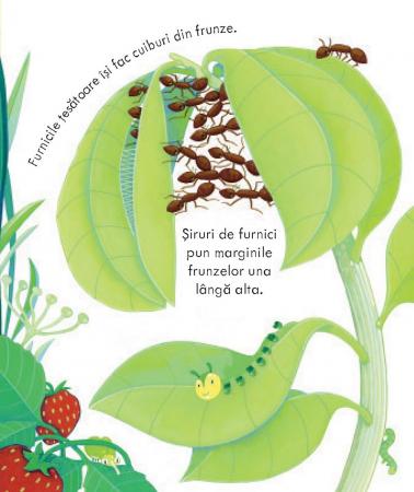 Casutele insectelor (Usborne) [4]