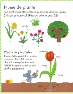 Prima mea carte despre cum cresc plantele (Usborne) [3]