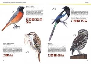 Prietenii păsărilor1