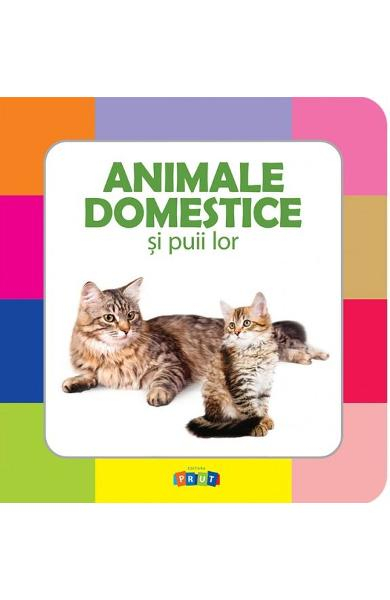 Animale domestice si puii lor 0