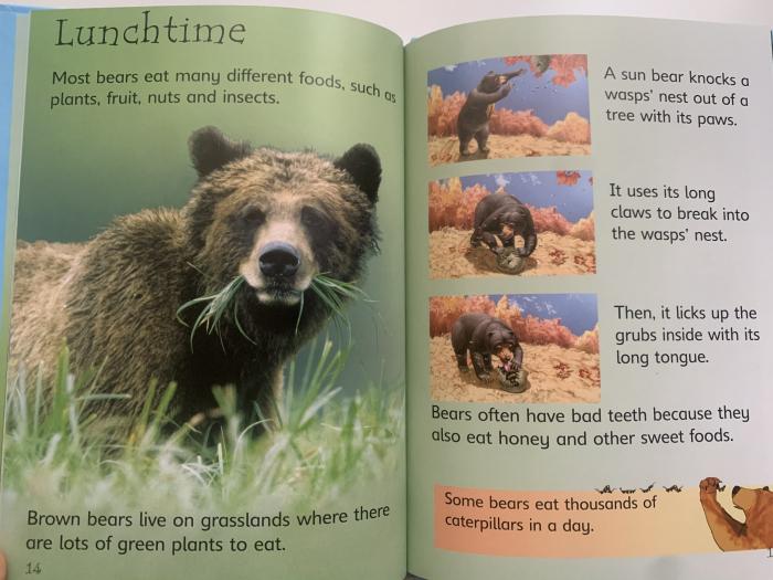 Bears [2]