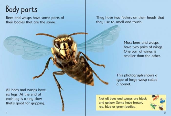 Bees and wasps [3]