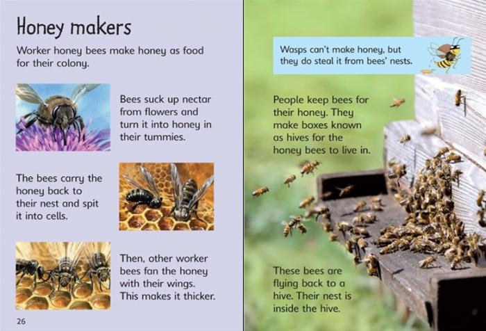 Bees and wasps [2]