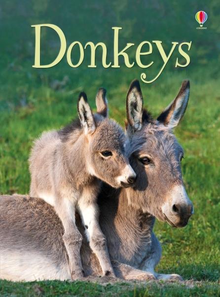 Donkeys [0]