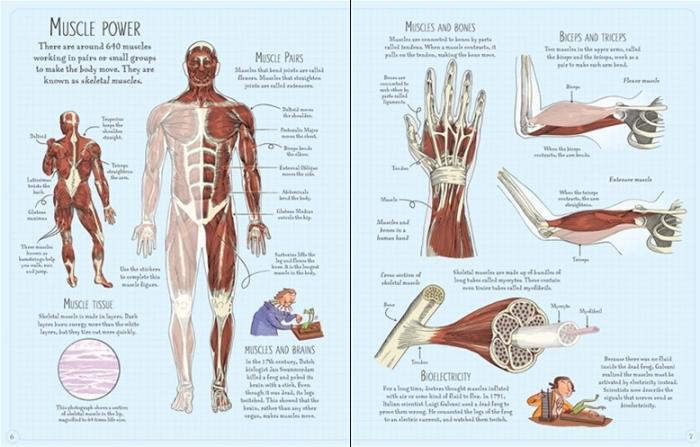 Human body sticker book [1]