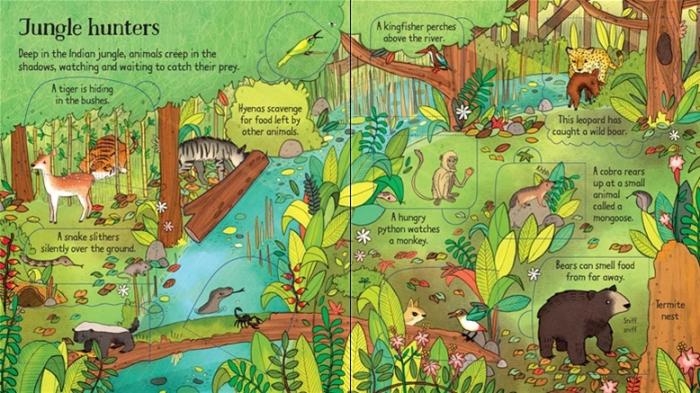 Look inside the jungle [3]
