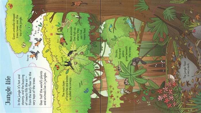 Look inside the jungle [1]