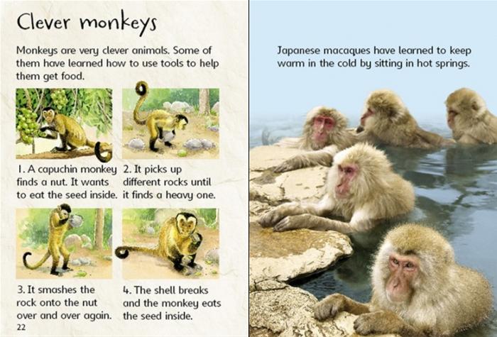 Monkeys [2]