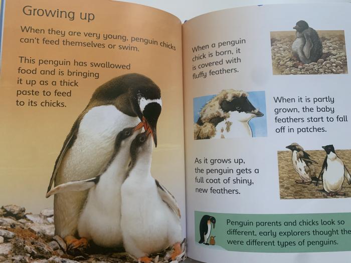 Penguins [3]