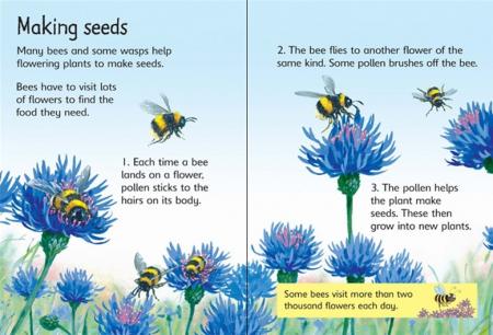 Bees and wasps [1]