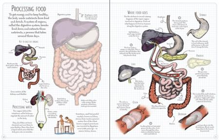 Human body sticker book [3]