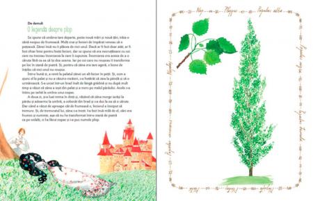 Luli și căsuța din copac [3]