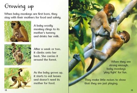 Monkeys [1]