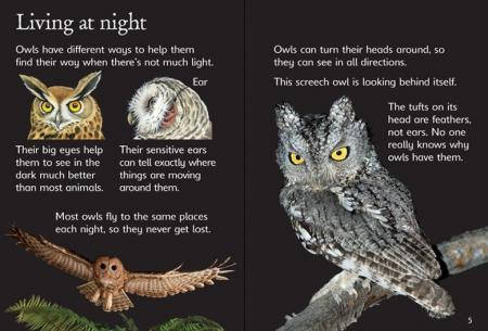Owls [2]