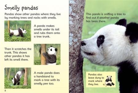 Pandas [3]