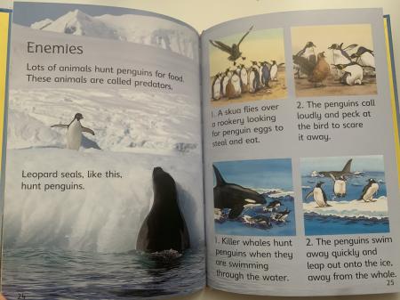Penguins [4]