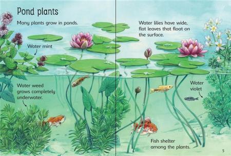 Ponds [3]