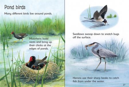 Ponds [2]