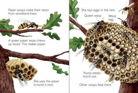 Woodland creatures [2]