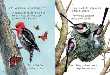 Woodland creatures [1]