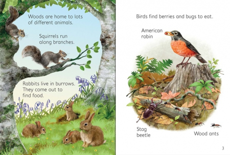 Woodland creatures [3]