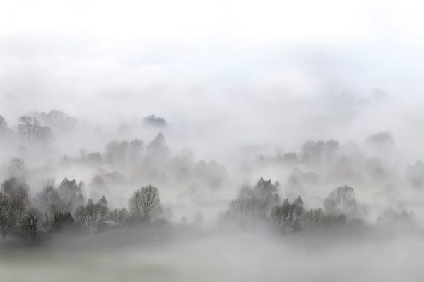 Tapet R15301- Morning Fog 0
