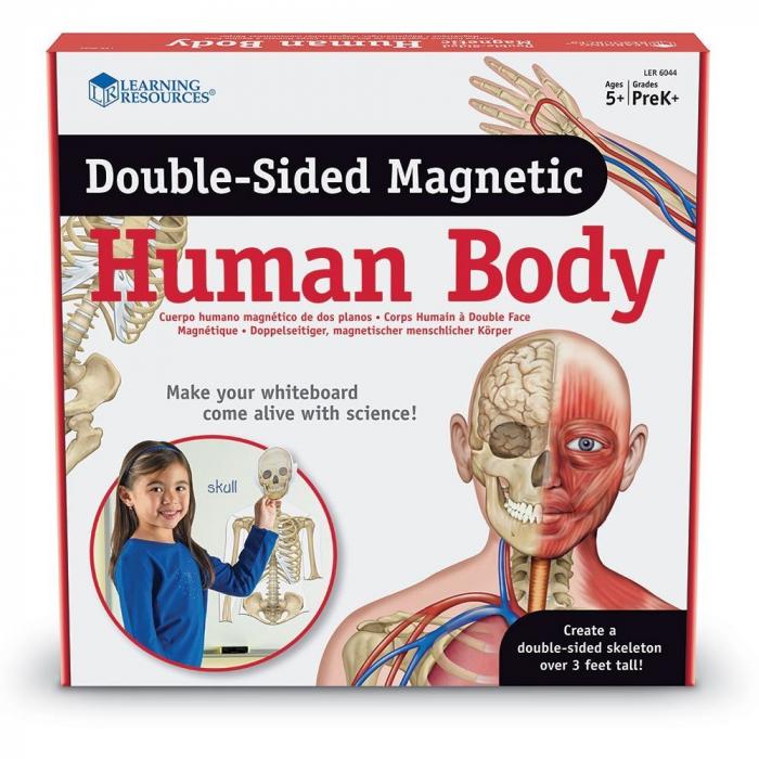 Corpul uman - set magnetic 0