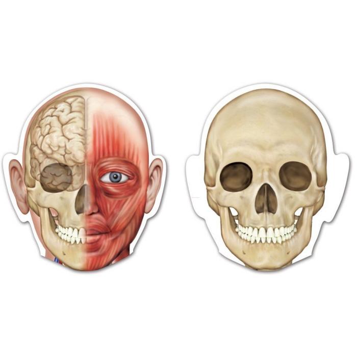 Corpul uman - set magnetic 2