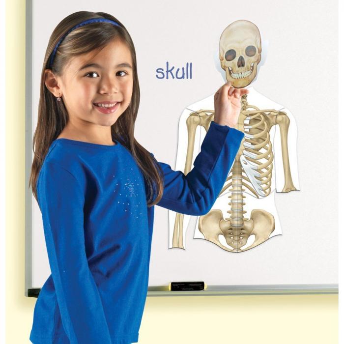 Corpul uman - set magnetic 4