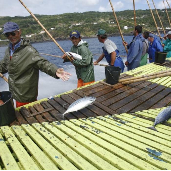 Santa Catarina ton in ulei de masline organic 2