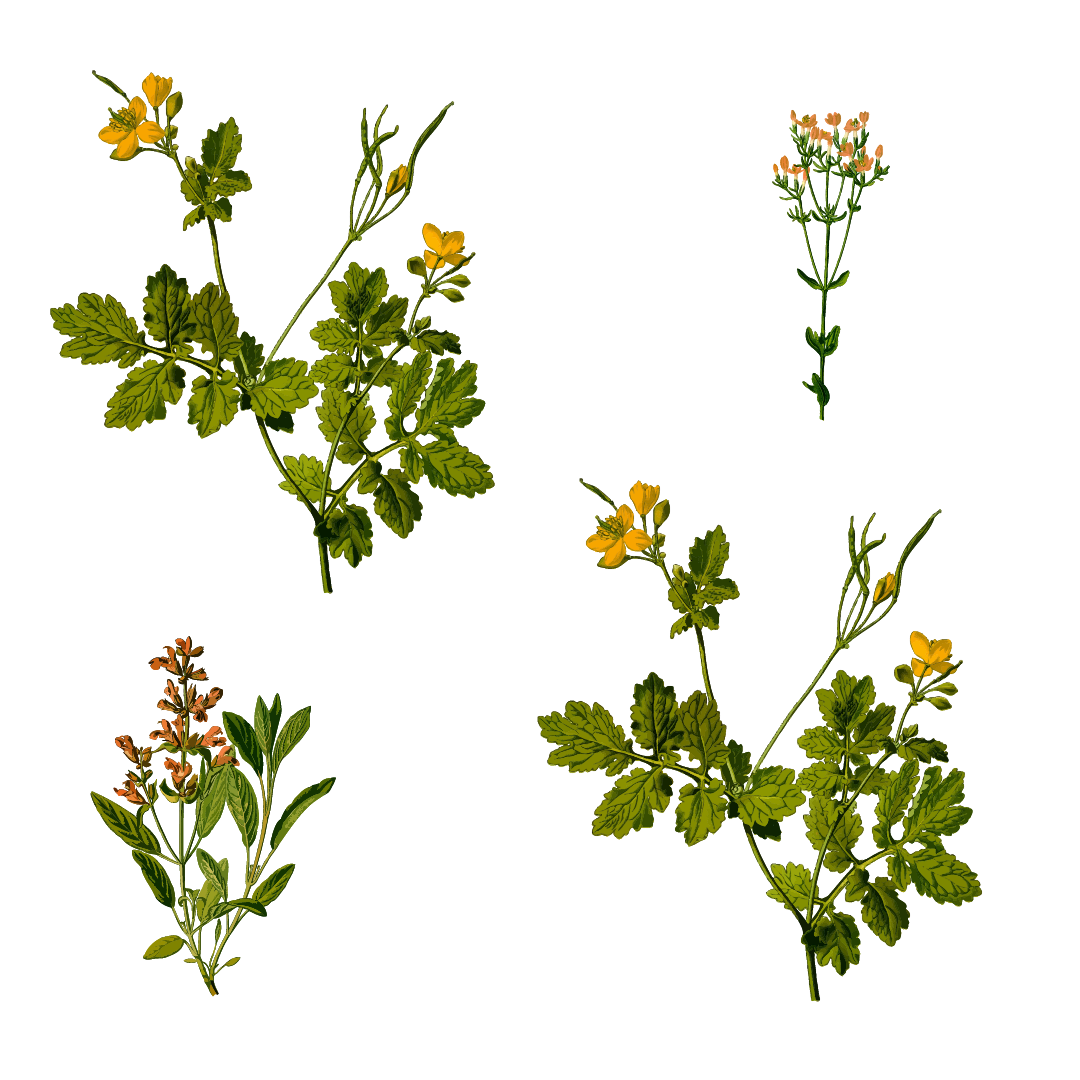Rostopasca, o planta medicinala pentru sanatate