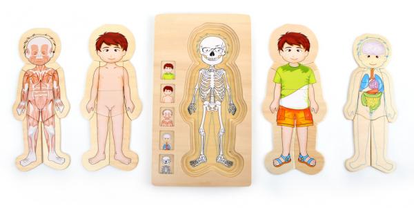 Puzzle din lemn corpul uman Tim 0