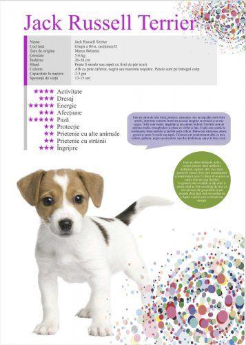 Afis Jack Russeil Terrier 50 x 70 cm 0