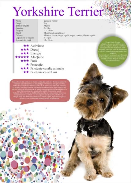 Afis Yorksire Terrier 50 x 70 cm 0