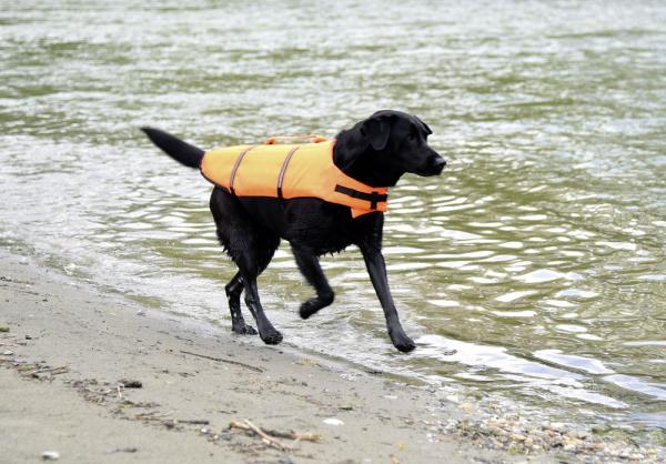 Vesta de salvare pentru caini, max.23 kg 9