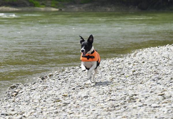 Vesta de salvare pentru caini, max.23 kg 7