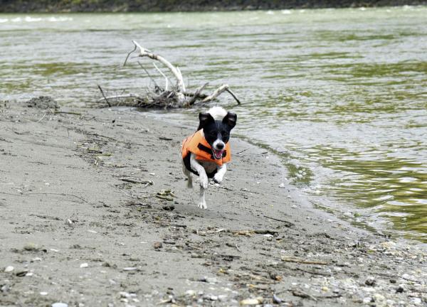 Vesta de salvare pentru caini, max.23 kg 8