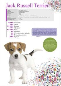 Afis Jack Russeil Terrier 50 x 70 cm