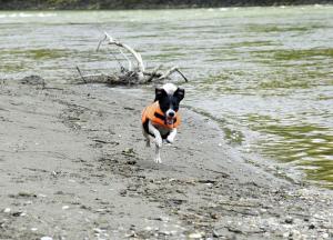Vesta de salvare pentru caini, max.11 kg8