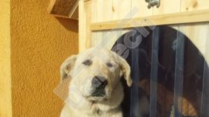 Perdea / Usa PVC Flexibil pentru cusca caini cu sipca de lemn cu suprapunere1